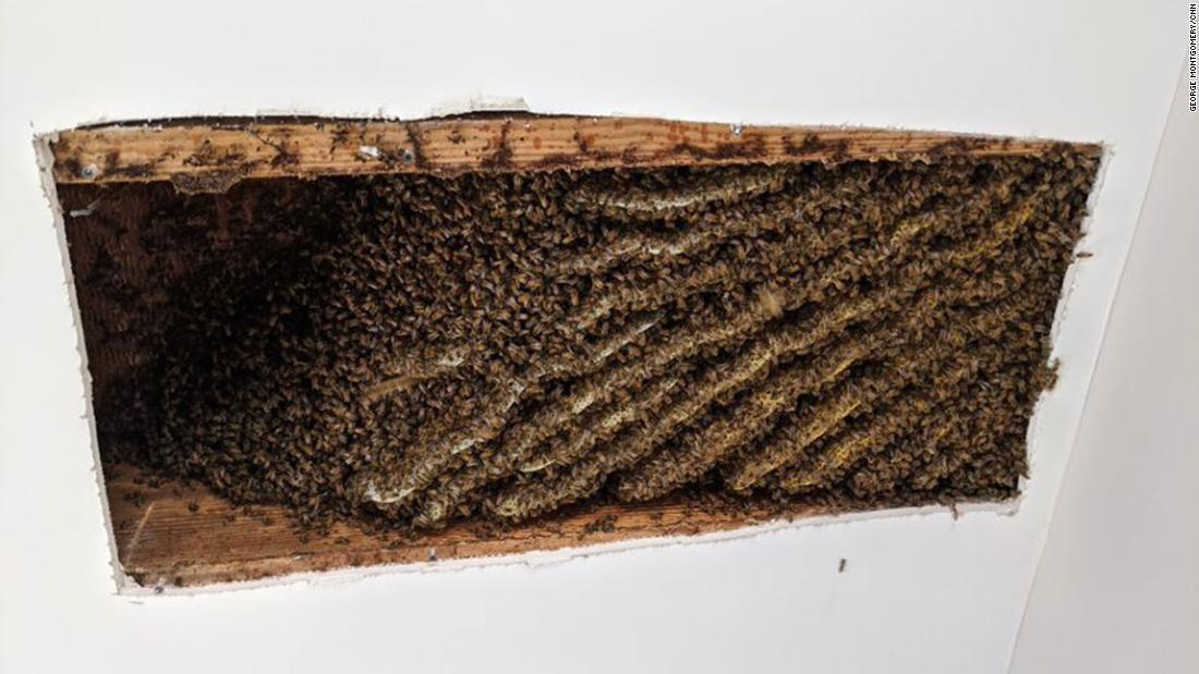 Man finds around 100,000 bees living in his home