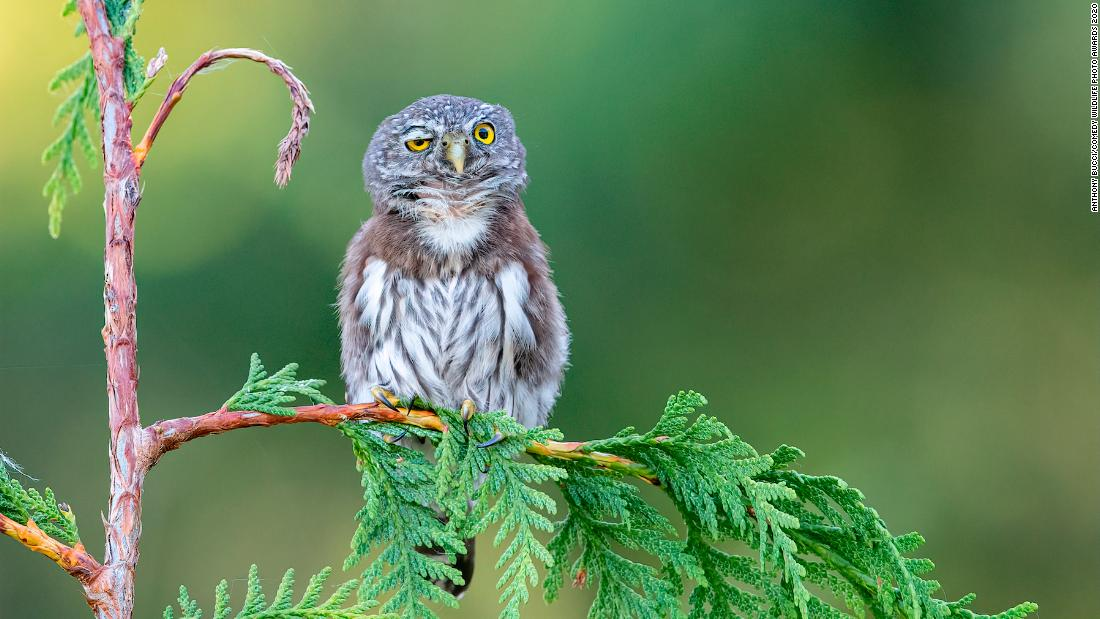 The works of the Comedy Wildlife Photography Awards 2020 are the laugh we all need right now