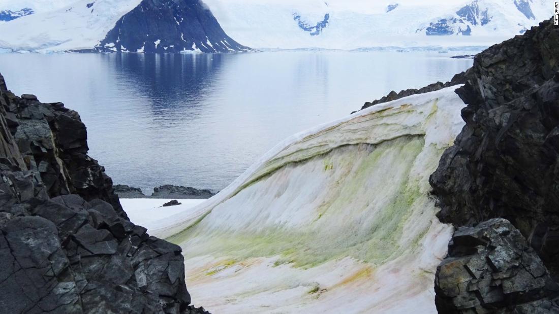 Multi-coloured snow algae is seen on Anchorage Island, Antarctica, in 2018.
