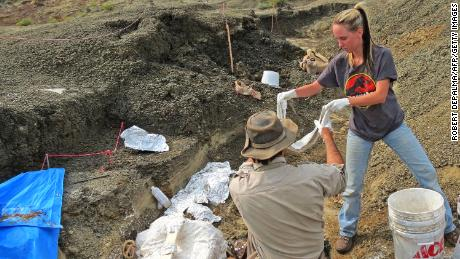 Scientists have found a fossil cemetery & # 39; connected to the asteroid that killed the dinosaurs