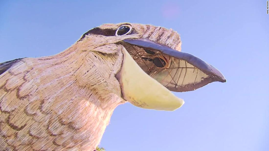 The giant kookaburra sculpture is bringing joy - and lots of laughter - to an Australian city