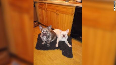 Two of Lisa Urso's dogs are depicted, Blue, left and Rocco.