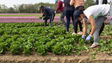 A few weeks ago they were engineers, chefs and waitresses. Now they are cultivating