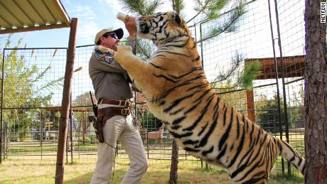 Reportedly, Tiger King Joe Exotic had over 200 big cats in his zoo in Oklahoma.