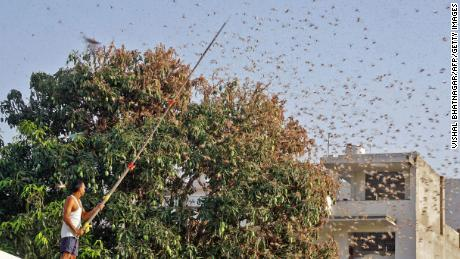 India has been using drones and fire trucks to combat its worst invasion of locusts in nearly 30 years