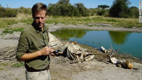 Botswana's return to elephant hunting won't solve any problems, ex-President says