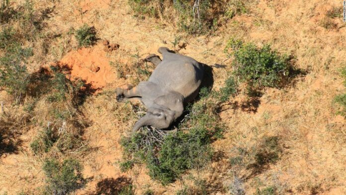 Botswana: More than 360 elephants die from mysterious causes