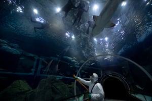 A worker disinfects the oceanic tunnel of the Rio de Janeiro Aquarium in Rio de Janeiro, Brazil.