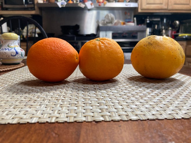 Oranges photographed on iPhone SE