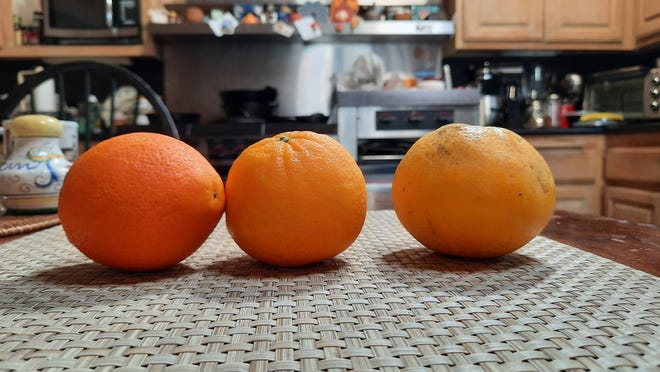 Oranges photographed on Samsung A71 phone