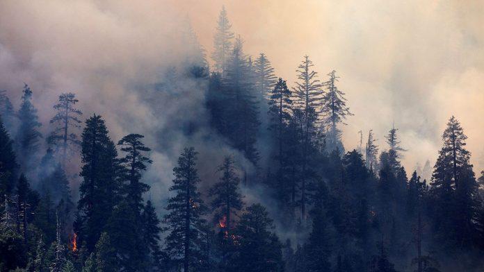 California wildfires erupt during heat wave, damaging Santa Rosa