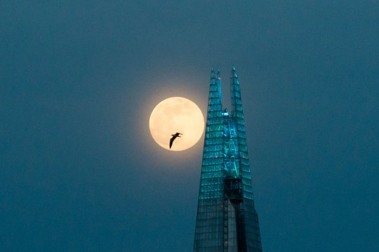 Super Pink Moon above the Shard skyscraper in London
