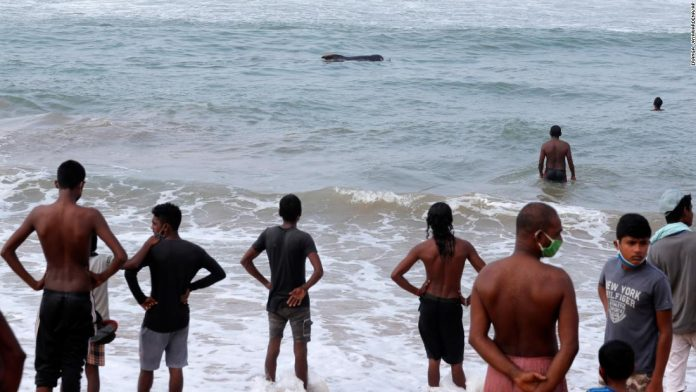 Sri Lanka rescued 100 beach whales after mass stranding