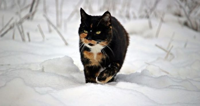 Science: Why do cats have streaks and spots on their coat?