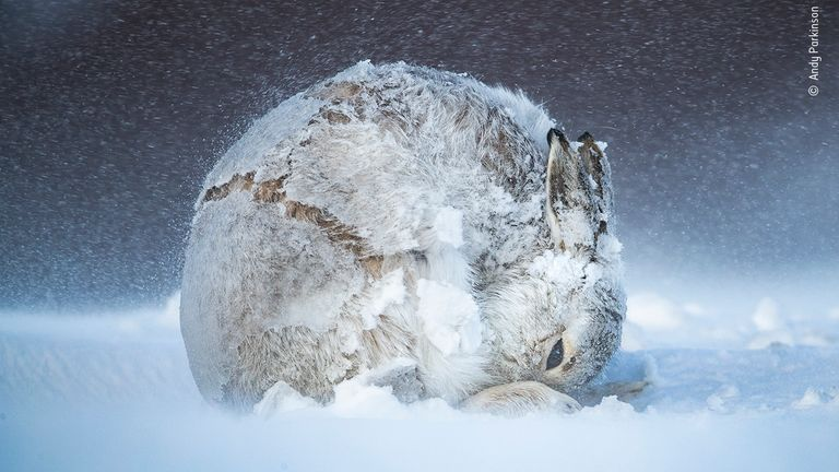Hare Ball by Andy Parkinson, United Kingdom