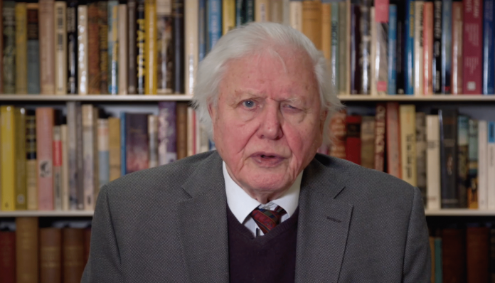 Naturalist David Attenborough has warned the UN Security Council that the world can