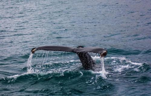 The whale was pulled out of a groove before a military exercise