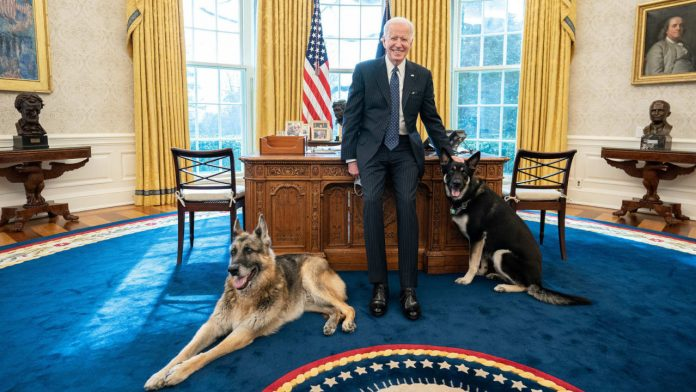 Attack on security guards: President's dogs exit White House - Politics