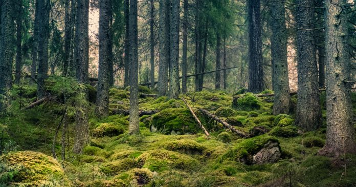 A cartographer accidentally finds a Bronze Age treasure in a forest in Sweden