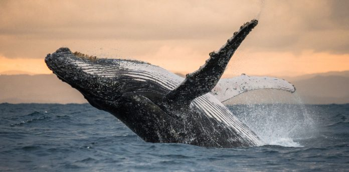 American fisherman says he was swallowed by a whale