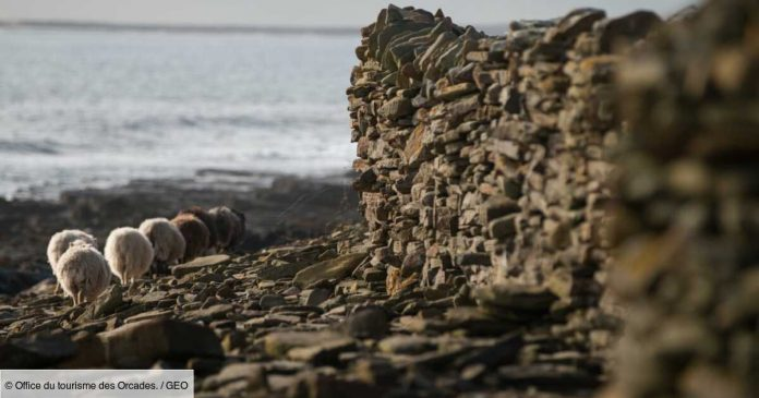 Jobs in Scotland?  This tiny island in Orkney is looking for someone to maintain its giant sheep fence