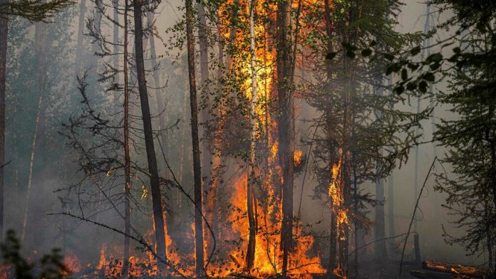 Massive forest fires in Siberia