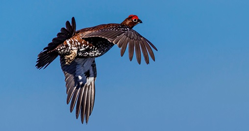 Scotland.  Grouse hunters don't fit in