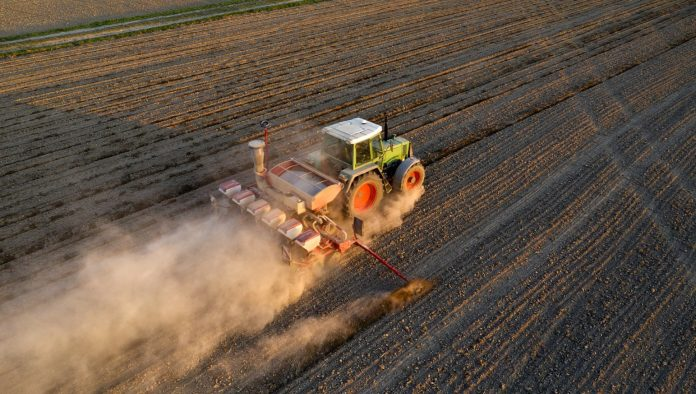 Bananas in Sicily and oil in Lombardy: the climate crisis reshapes the geography of agriculture