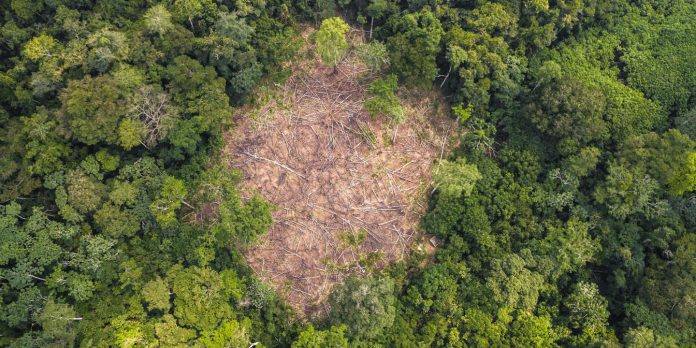 Attend the Conference on Conservation of Forests of Central Africa